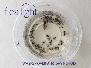 Flea Light